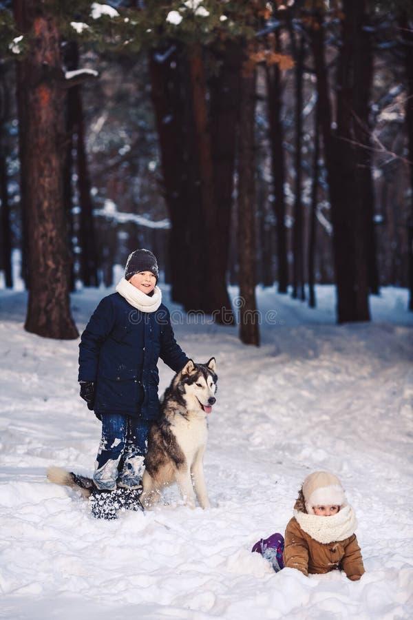 Barn har gyckel som spelar med deras hund i, parkerar i vinter arkivfoto