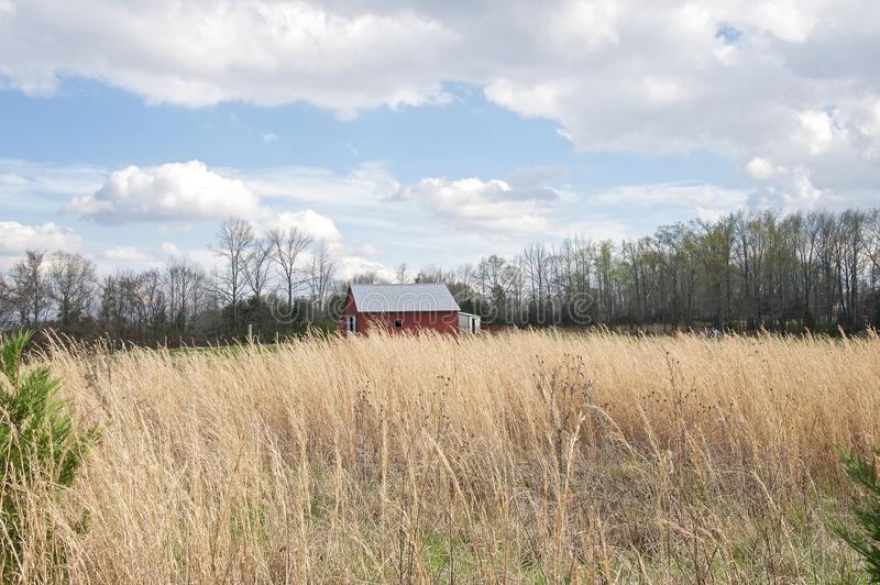 Barn House in a field of high wheat grass. A red barn with a tin roof sits in the middle of a field of high grass and weeds royalty free stock images