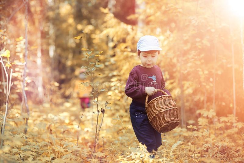 Barn i byn går till och med den höstskogen och gathen royaltyfri fotografi