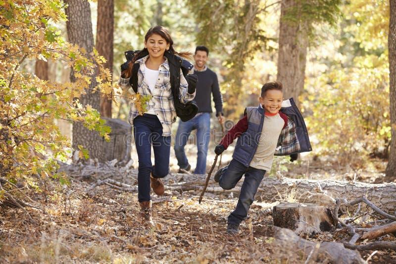 Barn i en skog som kör till kameran, fader som ser på royaltyfri fotografi
