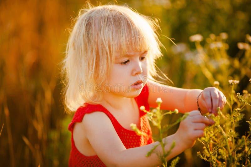 Barn i fältet arkivfoton