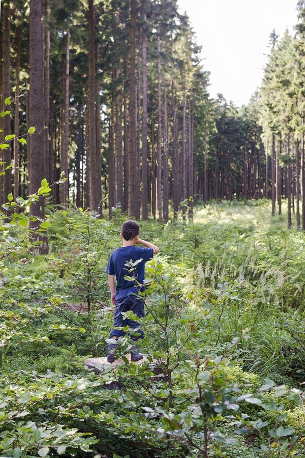 Barn i skog arkivbild