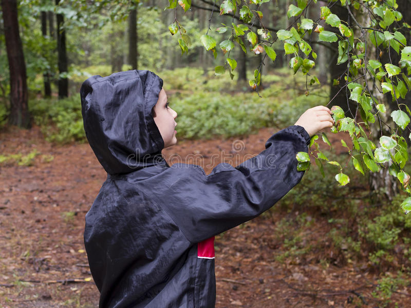 Barn i skog arkivfoto