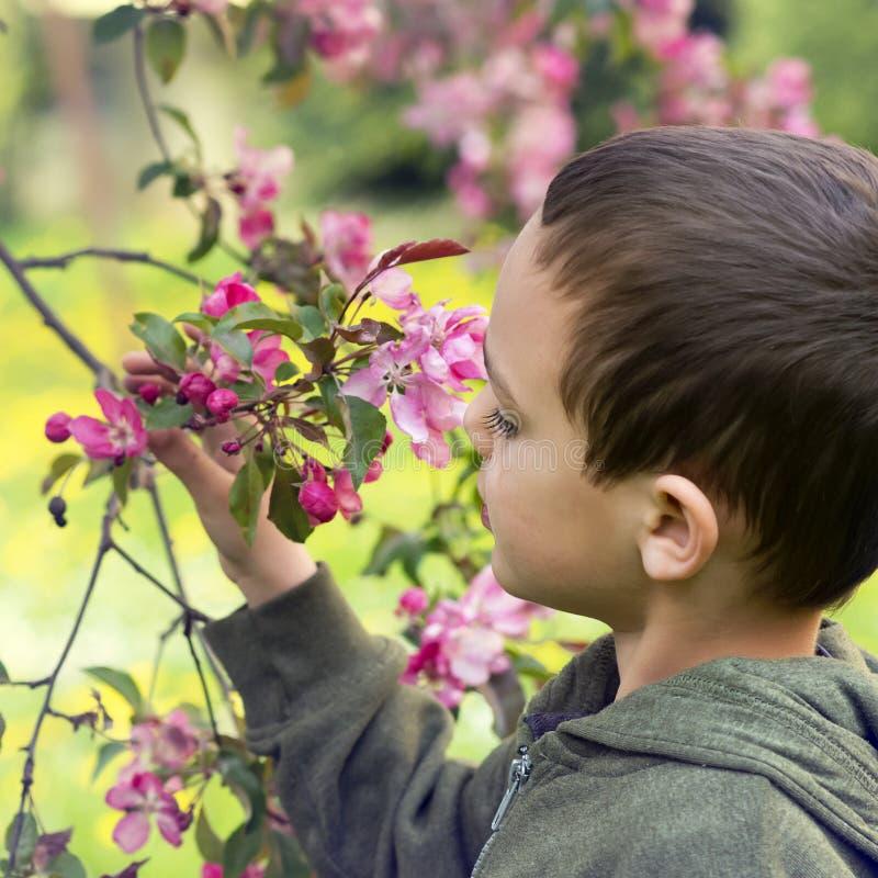 Barn i skog royaltyfri foto