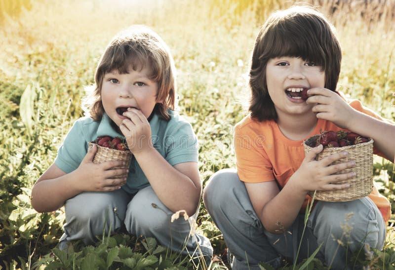 Barn med den soliga tr?dg?rden f?r jordgubbar med en sommardag arkivbilder