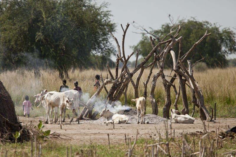 Barn och nötkreatur i södra Sudan royaltyfri bild