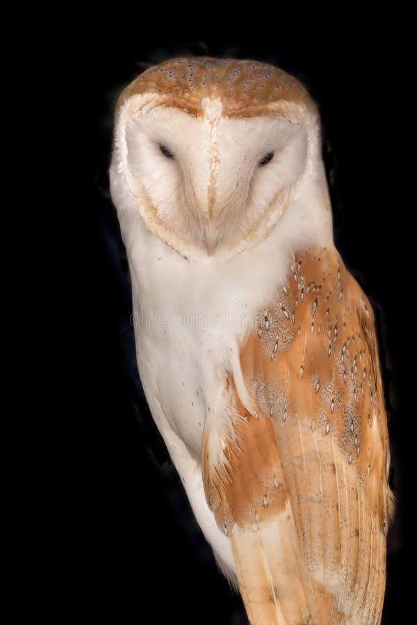 Free Barn Owl Royalty Free Stock Photo - 18869355