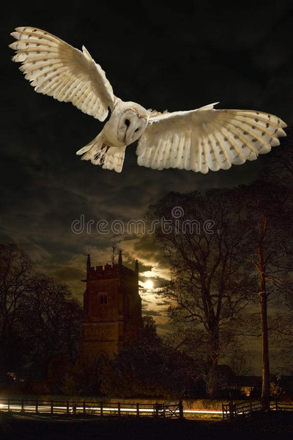 Barn Owl in flight at night. A barn owl (Tyto alba) in flight at night near a village church in a small village in Yorkshire in Northern England