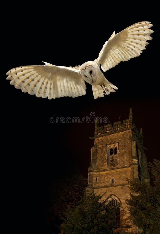 Barn Owl in flight at night. Barn Owl (Tyto alba) in flight at night near a church in North Yorkshire in the United Kingdom