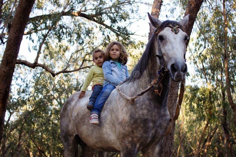 Barn på en häst royaltyfri fotografi