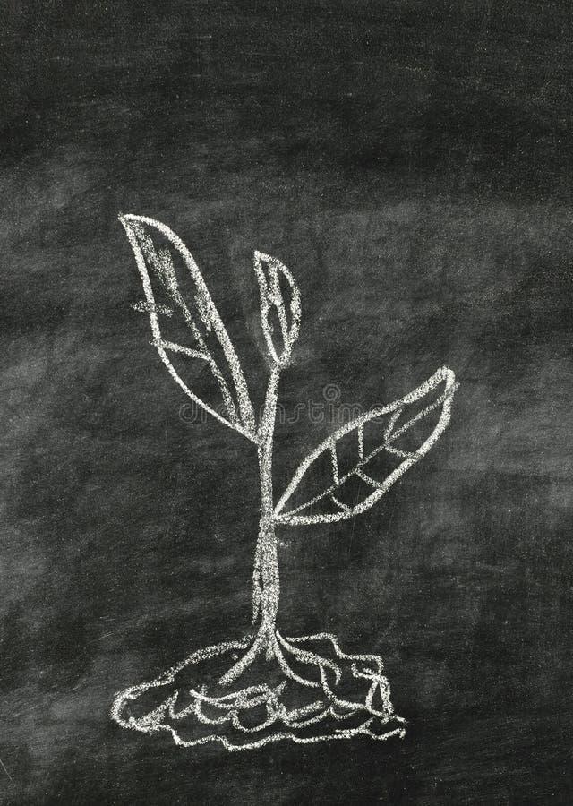 Barn planterar att dra på blackboarden fotografering för bildbyråer