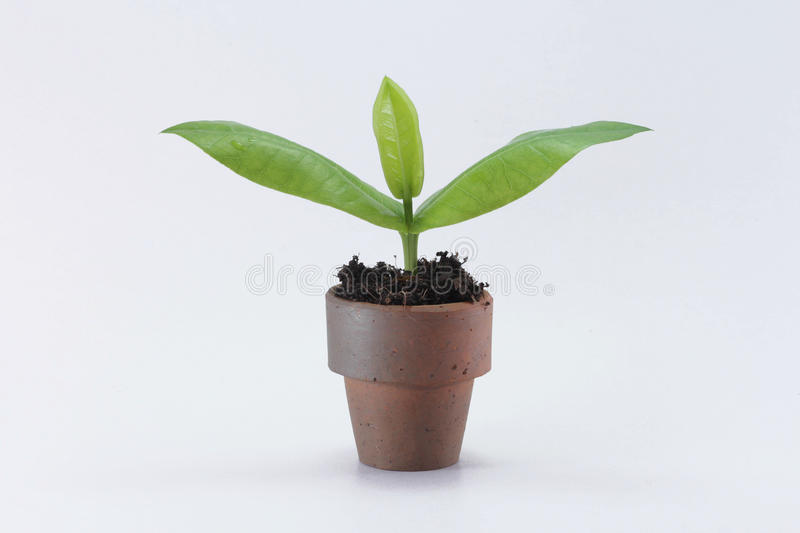 Barn planterar i kruka fotografering för bildbyråer
