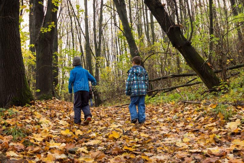 Barn som går i skog royaltyfri bild