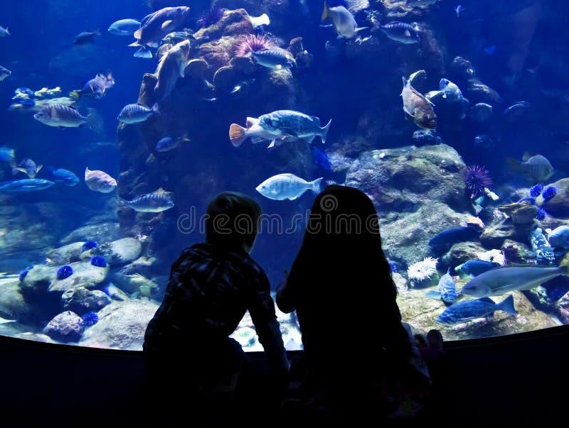 Barn som håller ögonen på fisken i ett stort akvarium arkivbild