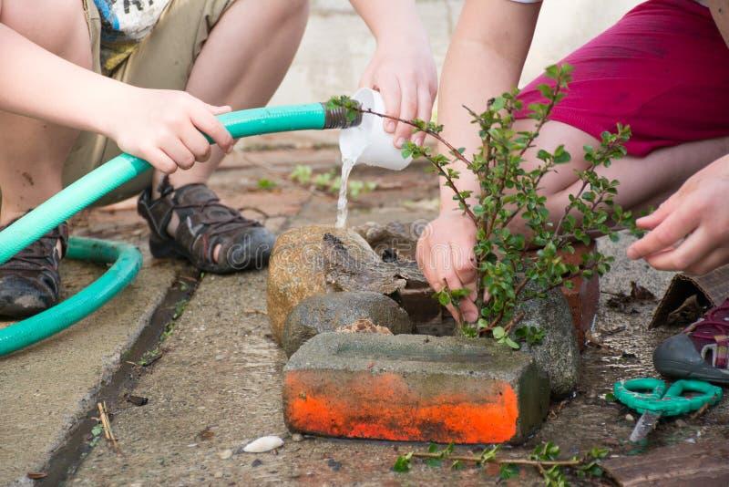 Barn som lägger in och bevattnar en växt fotografering för bildbyråer