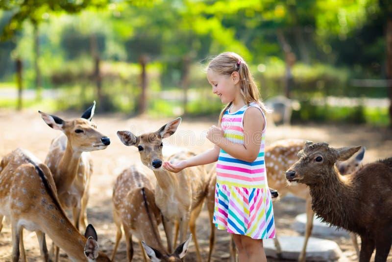 Barn som matar lösa hjortar på zoo Ungematningsdjur fotografering för bildbyråer