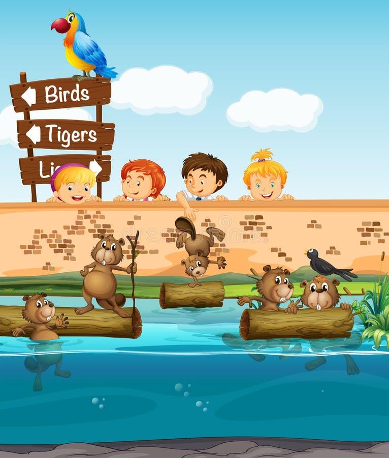 Download Barn som ser bäver i zoo vektor illustrationer. Illustration av tecken - 78732193