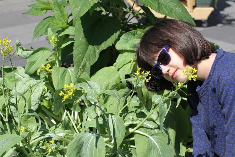 Barn som ser den senapsgula växten i stadsträdgård eller gata royaltyfri foto