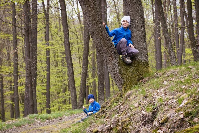 Barn som spelar i skog arkivfoton