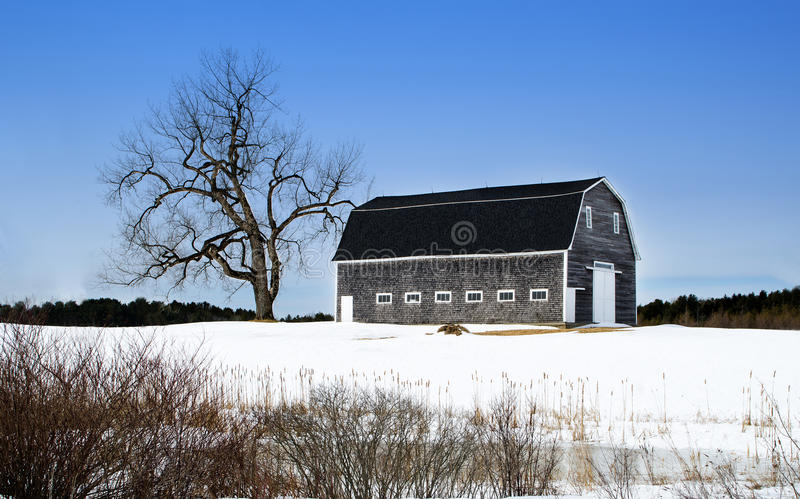 Barn and Tree royalty free stock images