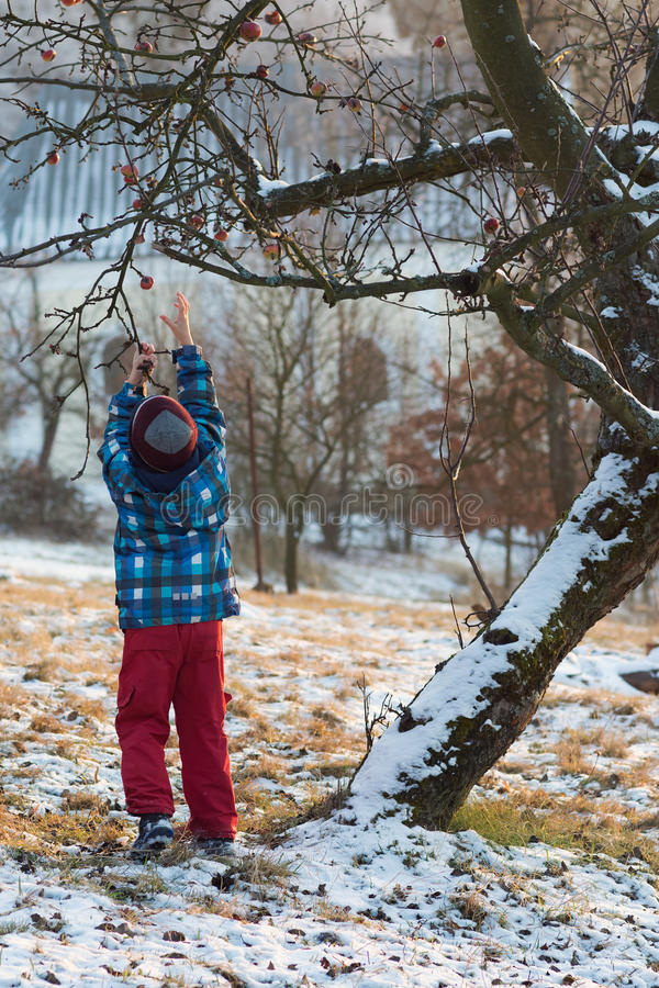 Barn under ett äppleträd, baksidasikt royaltyfri fotografi