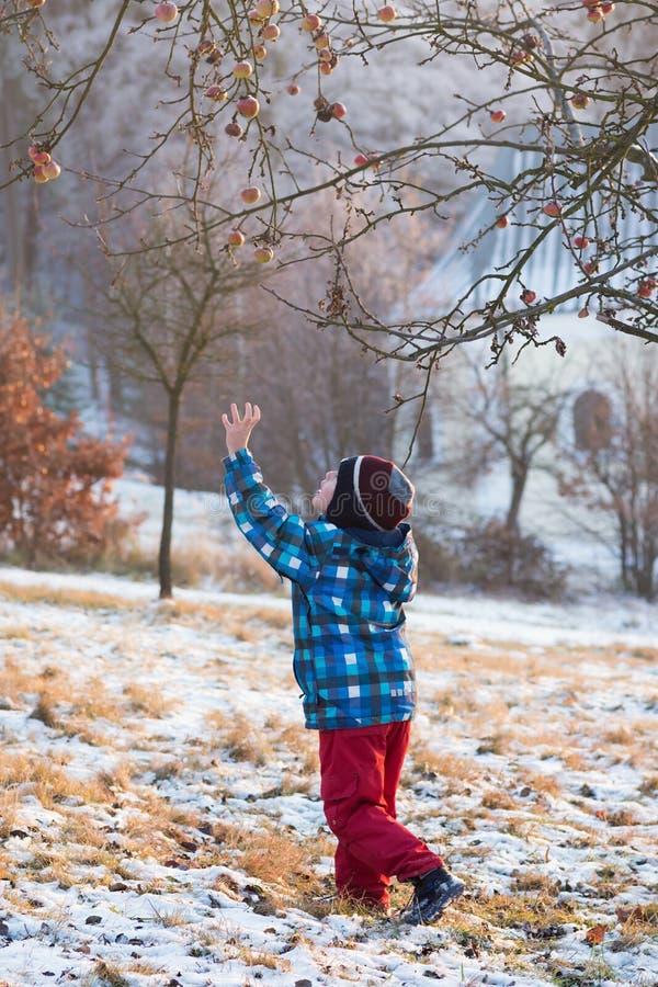 Barn under ett äppleträd i wintergarden arkivbild