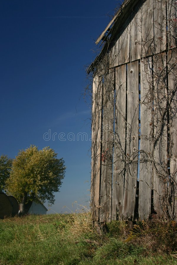 Download Barn, Vine, And Blue Sky - Vertical Stock Image - Image: 428039