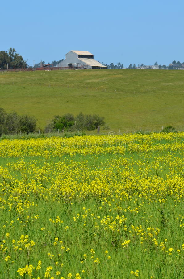 Barn and wildflowers in meadow royalty free stock images