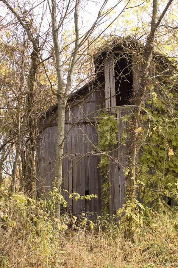 Download BArn in the woods stock image. Image of leaves, overgrown - 11621445
