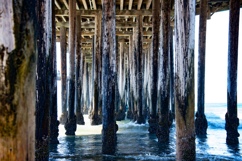 Barnacleson the Pier royalty free stock images