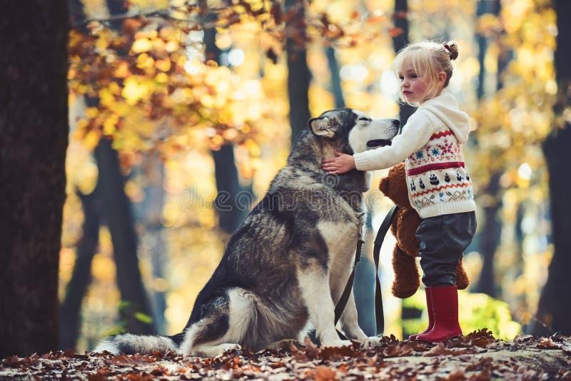 Barndom, lek och gyckel Lilla flickan med hunden i höstskogaktivitet och aktiv vilar den röda ridninghuven med vargen in royaltyfria foton