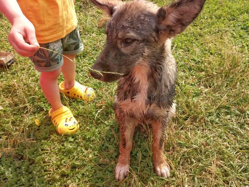 barnet erbjuder att hunden ska äta gräs royaltyfri fotografi