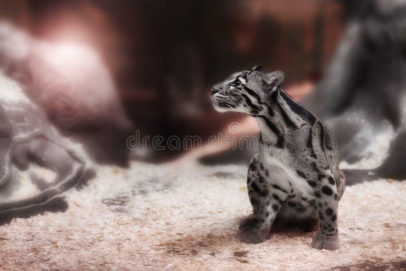 Barnet fördunklade leoparden royaltyfria foton
