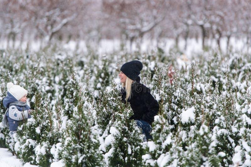 Barnet fostrar, och hon behandla som ett barn dotterlek i snö bland små granträd royaltyfria bilder