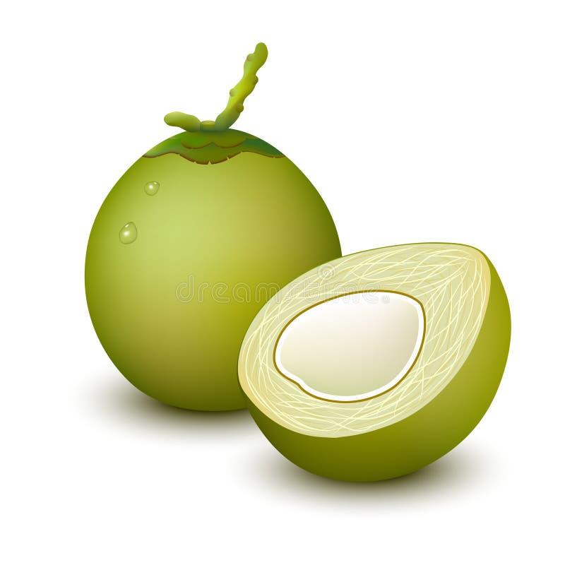 Barnet gör grön kokosnöten royaltyfri illustrationer