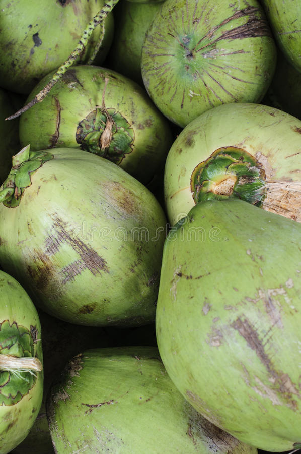 Barnet gör grön kokosnötter royaltyfri fotografi