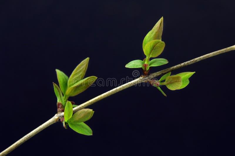 Barnet gräsplanknoppar på lila fattar arkivfoton