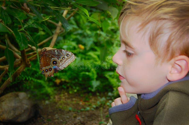 Barnet håller ögonen på slut för fjäril upp fotografering för bildbyråer