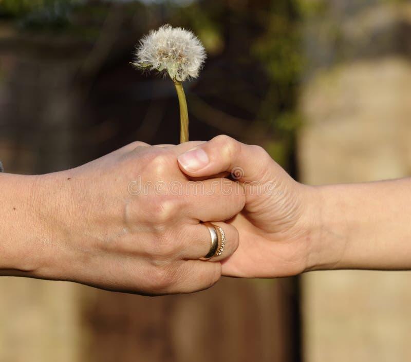 barnet hands holdingmodern royaltyfri foto