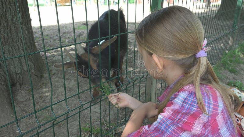 Barnet i zoo parkerar, matande getter för flickan, ungar älskar att vårda djur, husdjuromsorg royaltyfria bilder