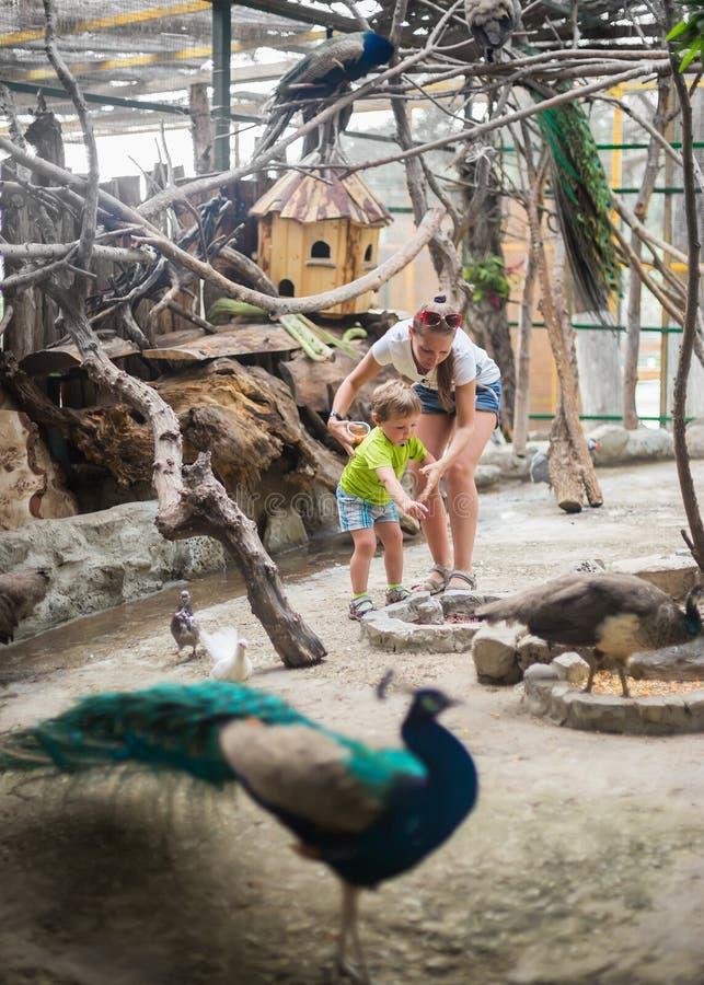 Barnet med modern på en fågellantgård matar fåglarna arkivfoto