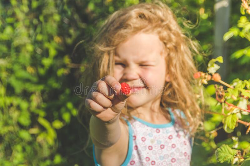 Barnet samlar i en can och äter, hallon arkivfoto
