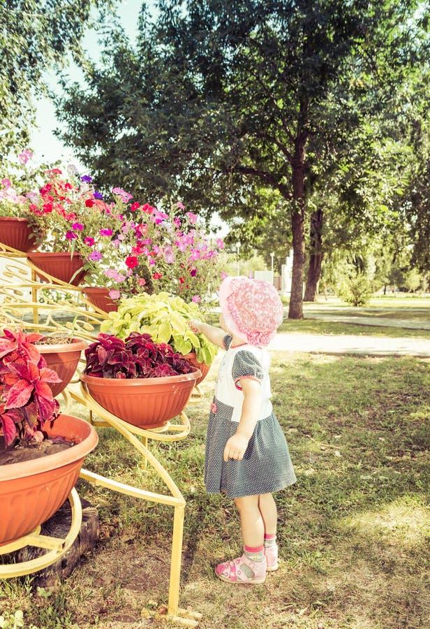 Barnet ser blommor fotografering för bildbyråer