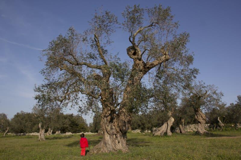 Barnet ser det stora trädet arkivfoto