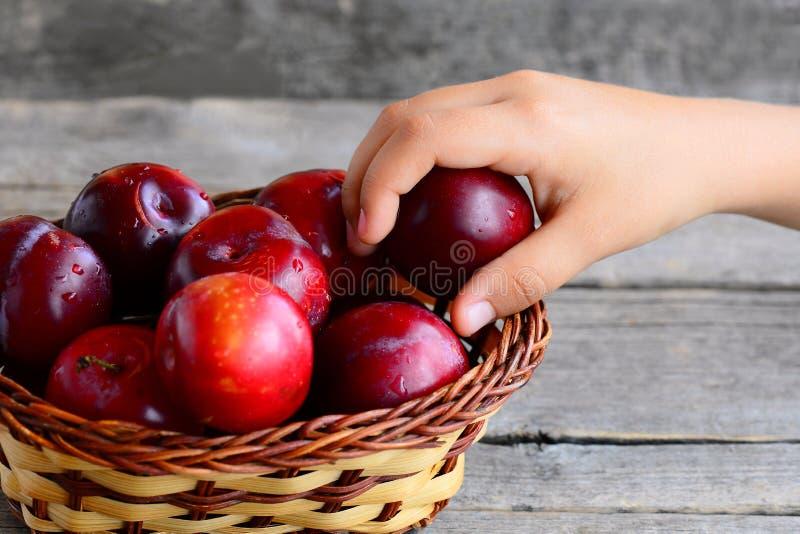 Barnet tar en plommon ut ur en korg Nya saftiga plommoner i en vide- korg på en gammal trätabell Sunt äta för ungar arkivbilder