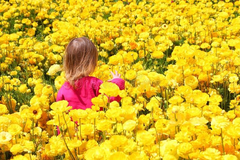 Barnflicka bland de härliga gula blommorna isolated rear view white royaltyfria foton