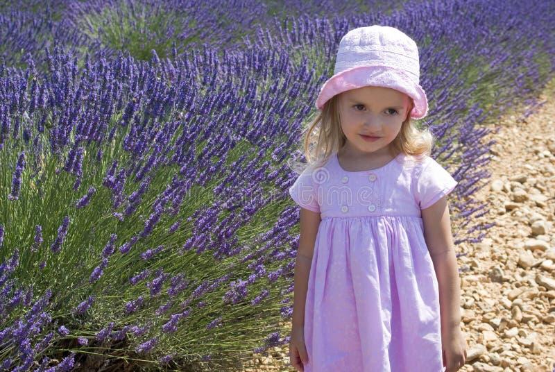 Barnflicka i blom- fält av lavendel royaltyfria bilder