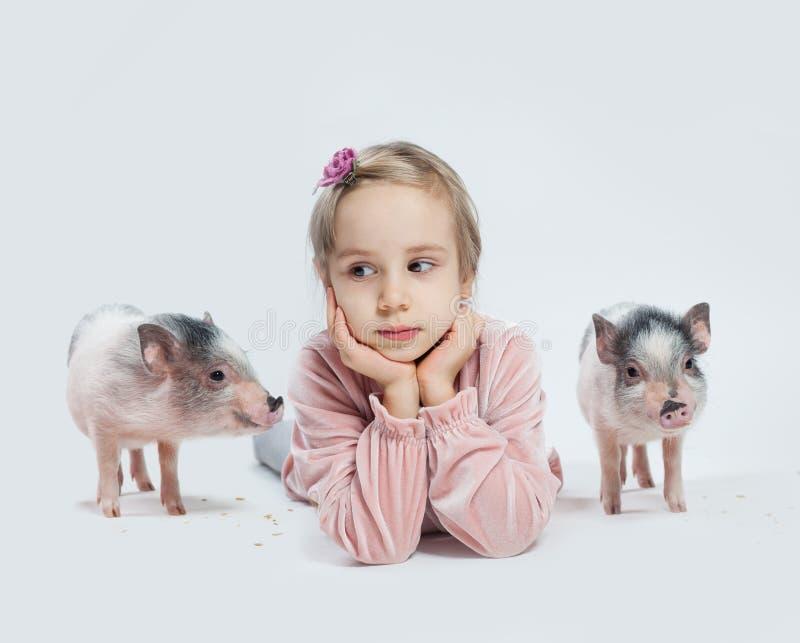 Barnflicka och mini- svin på vit bakgrund, stående arkivbilder