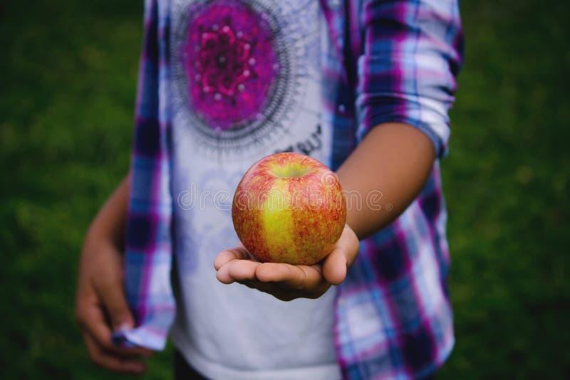 Barngossebarns hand som rymmer ett moget stort äpple arkivfoton
