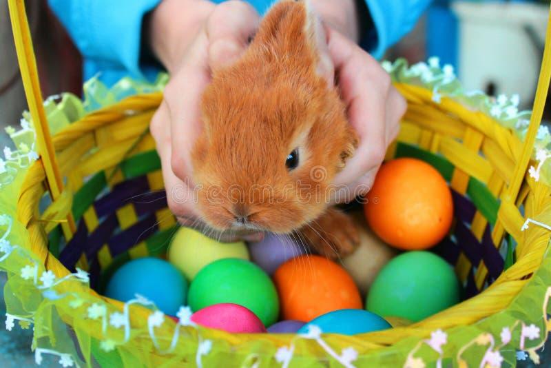Barnhänder rymmer den lilla röda easter kaninen och sätter den i en korg med kulöra ägg royaltyfri fotografi